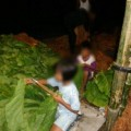 Buruh Anak di Perkebunan-12 at 16.21.36