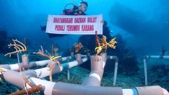 Bhayangkari LakukanTransplantasi Koral di Taman Laut Bunaken