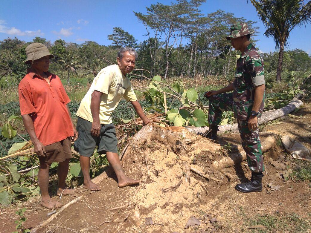 Masyarakat Relakan Tanah Dan Pohon Untuk Pembangunan Jalan TMMD