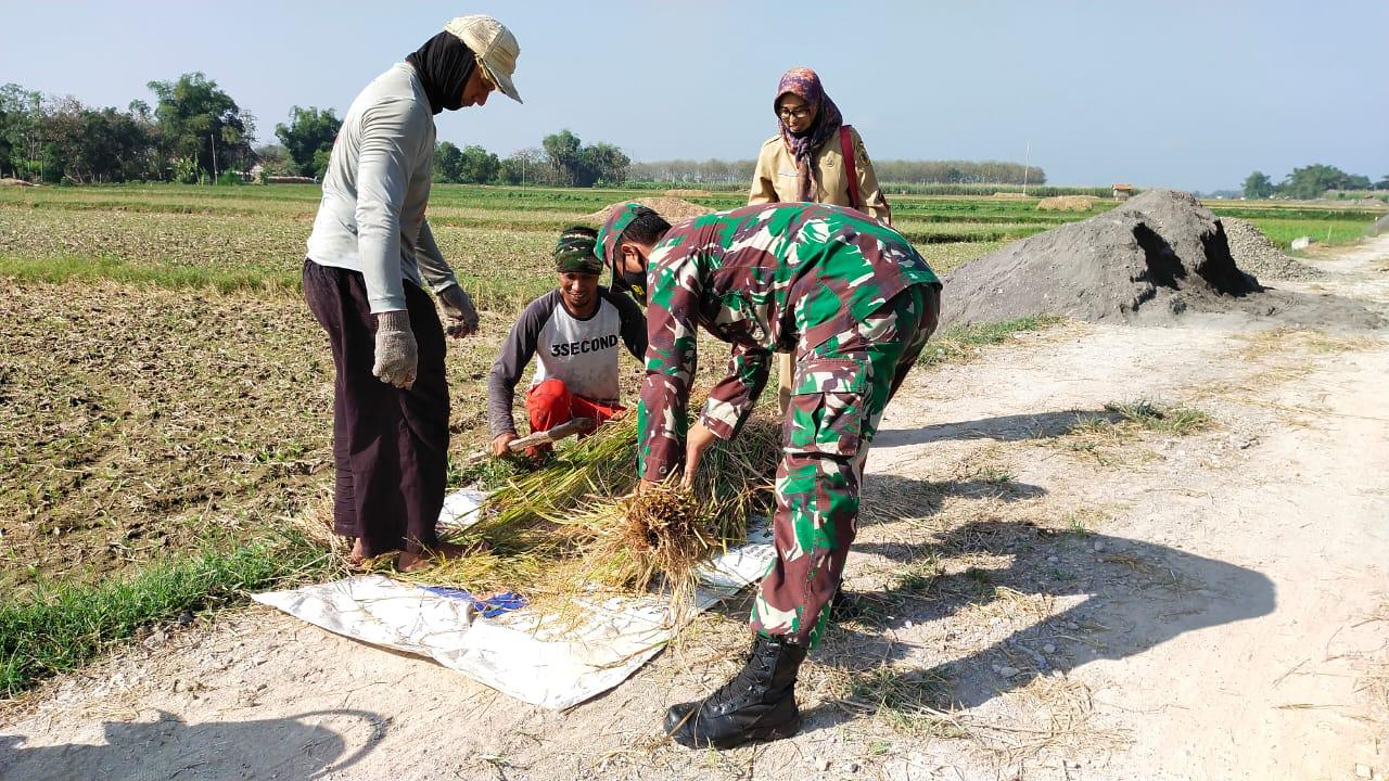 Anggota Satgas TMMD JUga Membantu Ubinan Para Petani Di Desa Tamansari
